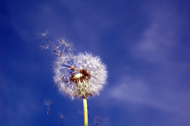 Spring Allergies-Pollen