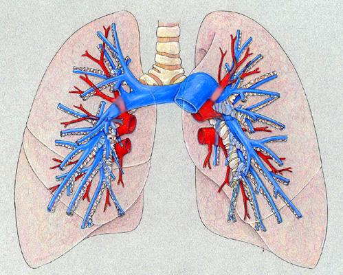 pulmonary tests